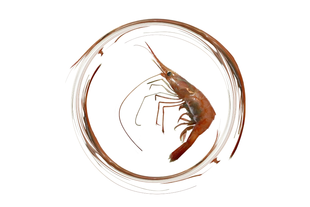 image of a zen calligraphy of antennas of a shrimp