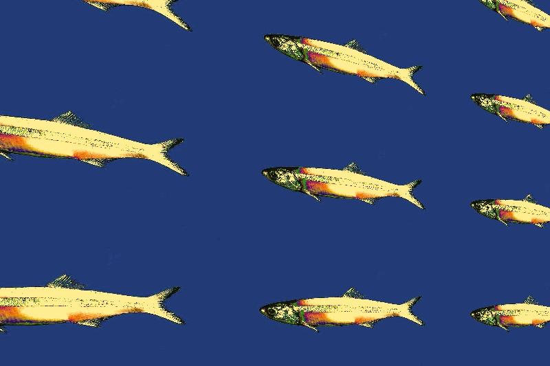 image d'un défilé d'anchois dorés