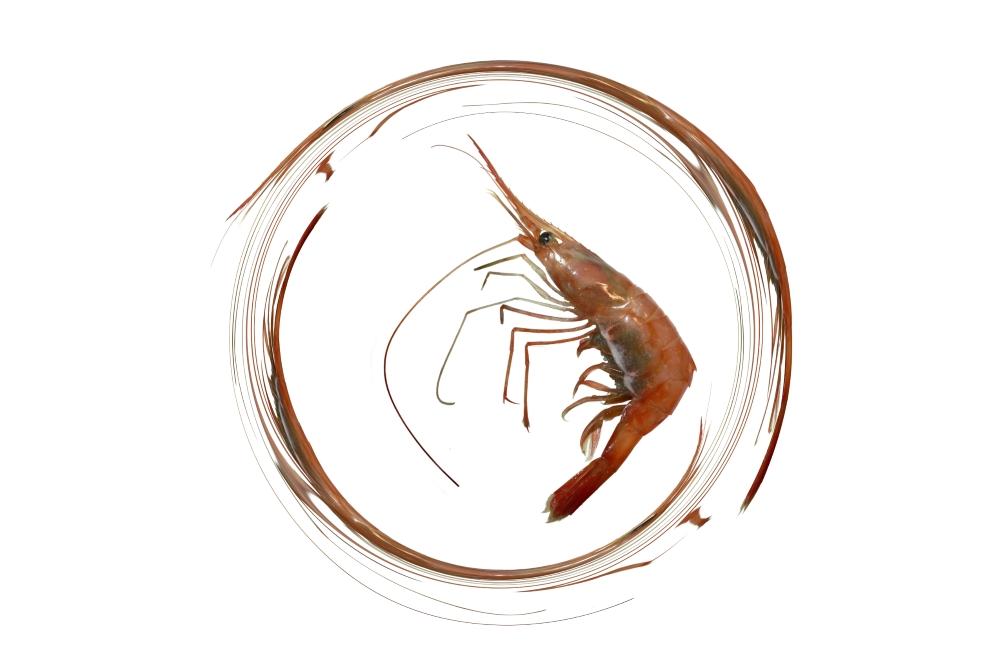 image d'une calligraphie zen des antennes d'une crevette