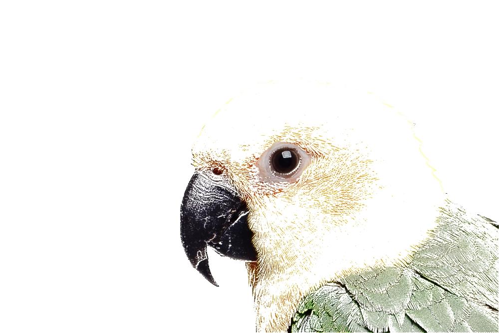 image du perroquet amnésique